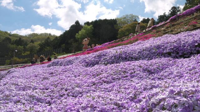 春の芝桜と姫路夢前地区オススメスポット巡る旅