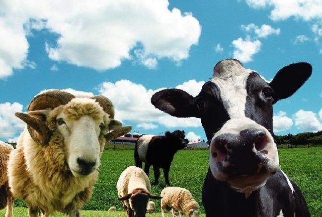 ひつじ年!マザー牧場で羊の大行進を見て今年をスタート!