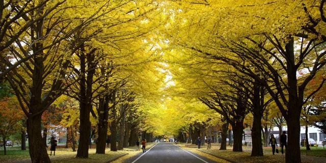 札幌中心街のおすすめ散策スポット