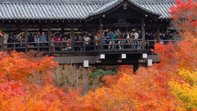 JR線だけで京都の紅葉を巡る 東福寺から泉涌寺七福神まで