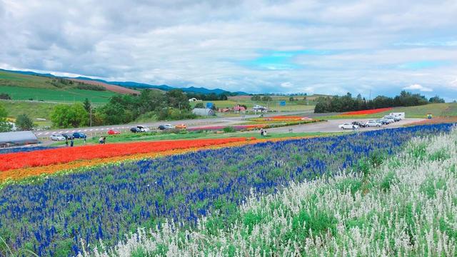 旭川出発🚙美瑛と富良野を半日でサクッと楽しもう!
