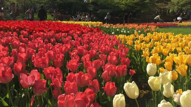 【立川・吉祥寺】ファミリーでもデートでも。都心から30分のオアシス♪昭和記念公園でピクニック♡