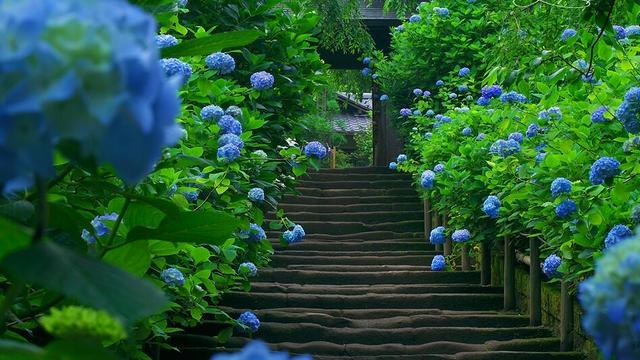 鎌倉、北鎌倉の魅力満載❤