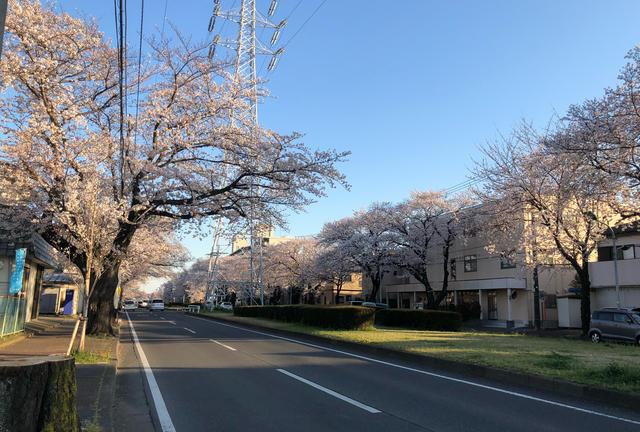 こんな時だから、外で桜を眺めて散歩