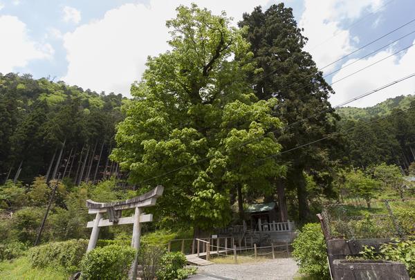 稲荷神社の写真・動画_image_435224