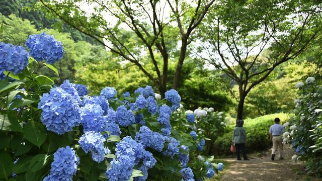 【宮崎夏の花旅】初夏の花を巡る🌻宮崎を色鮮やかに彩る花々を紹介します!