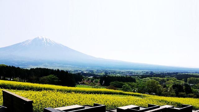 富士山と春の花々ビュースポット周遊(静岡~山梨)