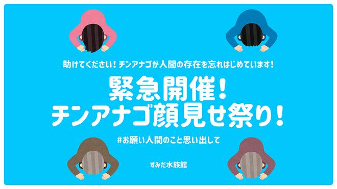 「チンアナゴ顔見せ祭り!」イメージ
