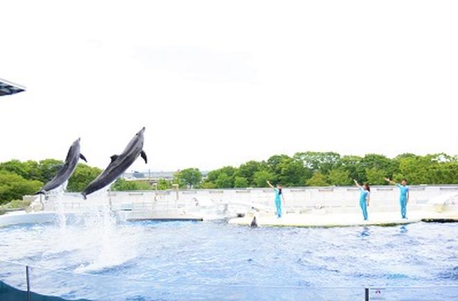 イルカの新パフォーマンス「YEAH!!」(イメージ)