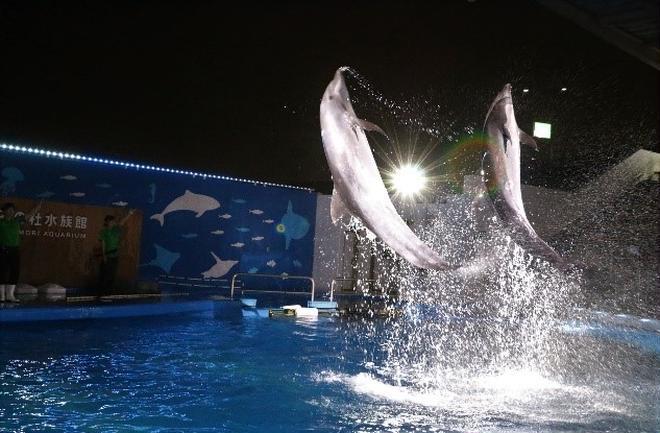 イルカのパフォーマンス イメージ