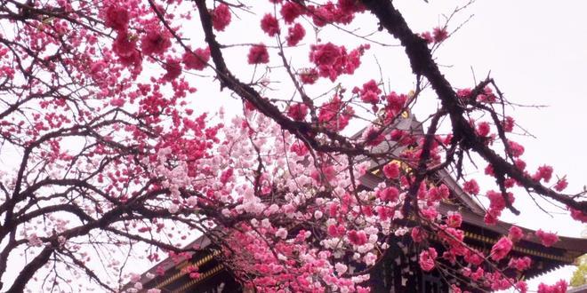 """愛知県一宮市♪真清田神社祭礼と""""古きよき時代の建物""""を訪ねて…!"""