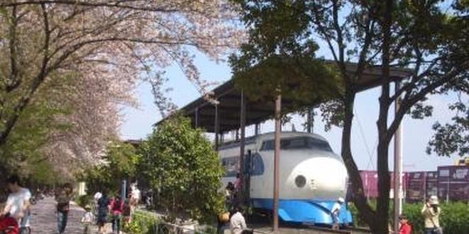 鉄道ファン必見!満開の桜と一緒に記念撮影しよう!