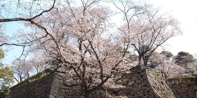 【宮崎冬の花旅】四種類の花が彩る早春の延岡など冬の花が楽しめるスポットを紹介!