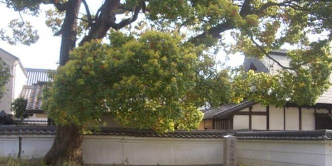 鴻池新田と徳庵