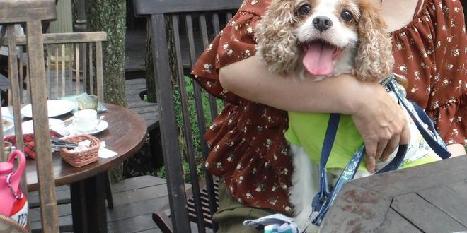 愛犬と行く那須高原🎵