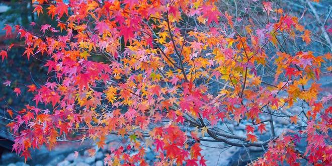 【熊本】街全体が一つの宿。唯一無二の「黒川温泉」へ