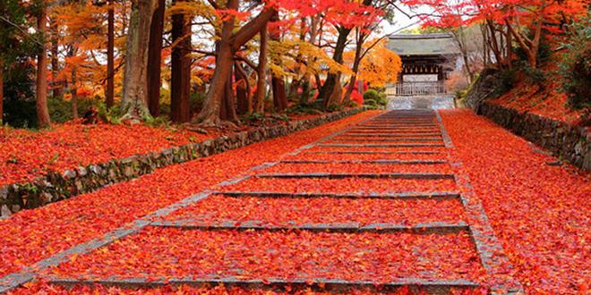 京都からぷらっとサイクリング旅