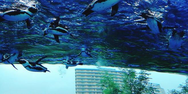 【雨の日デートプラン】池袋サンシャインシティを1日遊びつくす