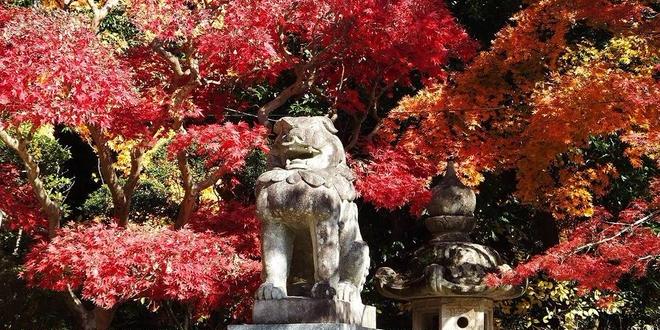 紅葉🍁香取神宮@茨城スポット🚘