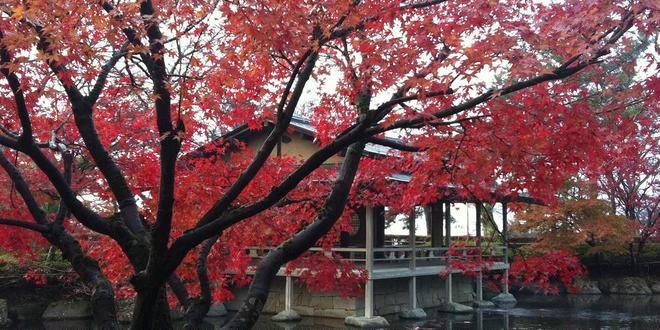 秋の紅葉の名所