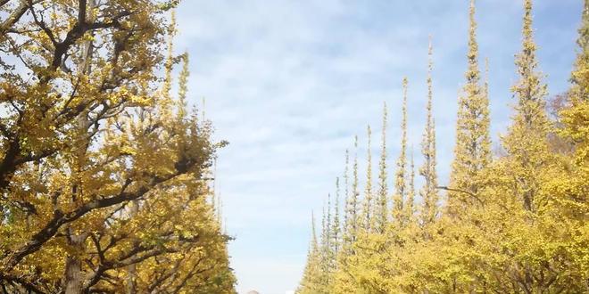 神宮外苑 秋色散歩