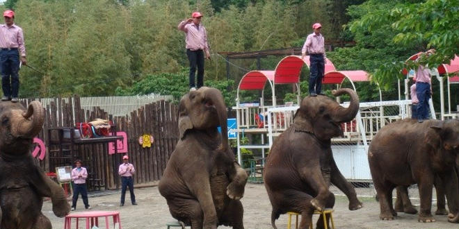 """""""子供が主役""""驚愕のぞうの国!なんと象に乗れて鼻にぶら下がれて餌もあげられるって知ってます?"""
