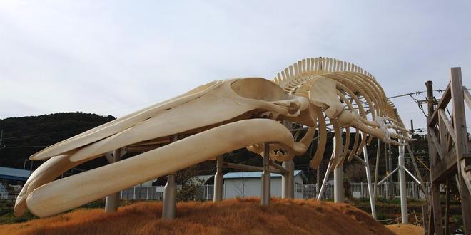 地球史上最大級の生物/シロナガスクジラを求めて