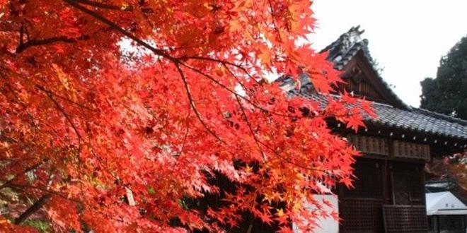 京都 紅葉の修学院を歩く大人旅