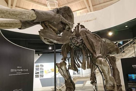 アジアゾウの化石