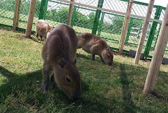 動物触れ合い園も入場できます。