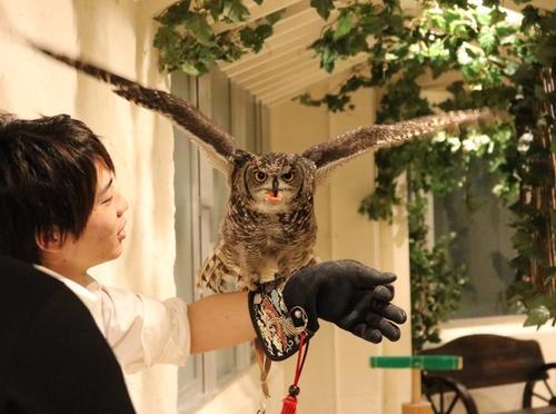 原宿でタカやフクロウとふれあえ、鷹匠になりきりのフライト体験「鷹匠体験」ができる!