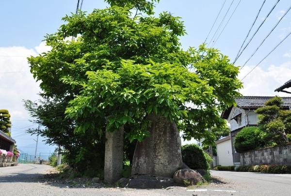 永源寺の写真・動画_image_67125