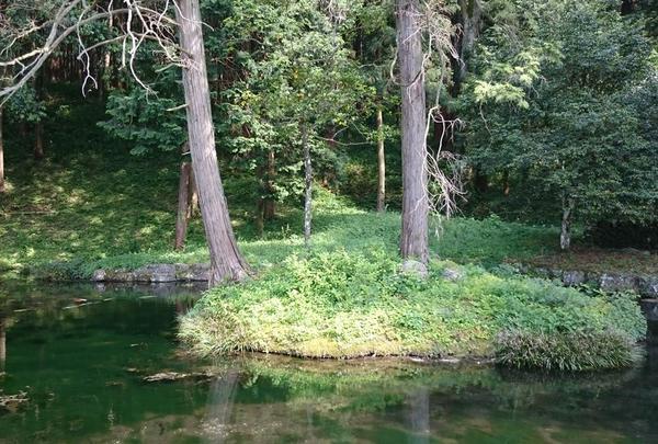 神鯉のいる湧水池