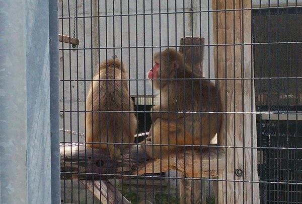猿が毛繕いし終わったところの瞬間。