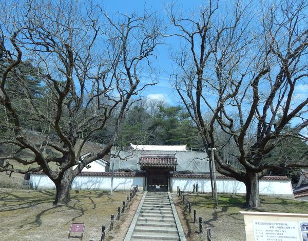 孔子廟と楷の木