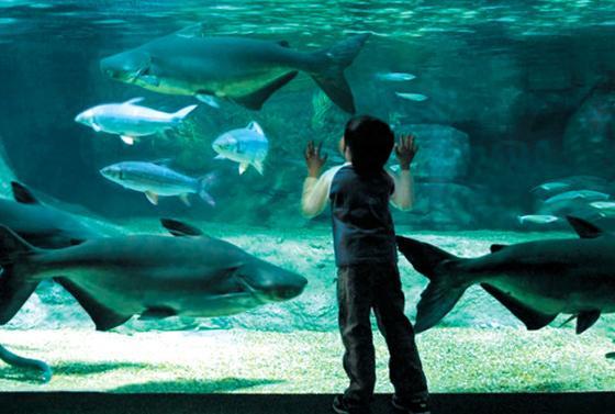 超大型淡水魚が見られる