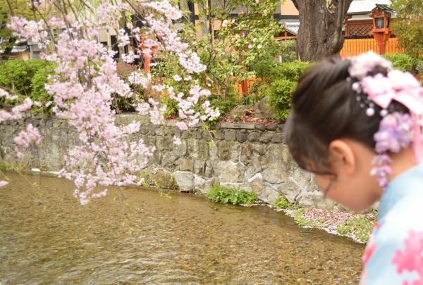 祇園白川の写真・動画_image_423316