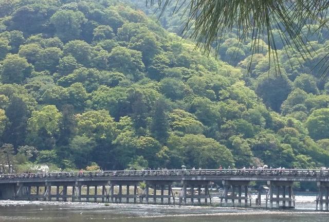 新緑の嵐山、世界遺産 天龍寺と仁和寺
