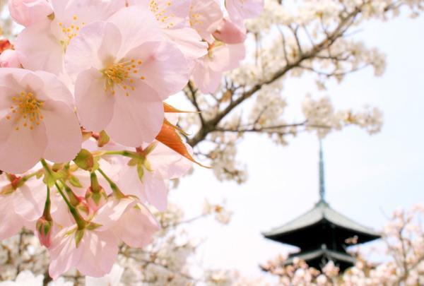 御室仁和寺駅の写真・動画_image_65951