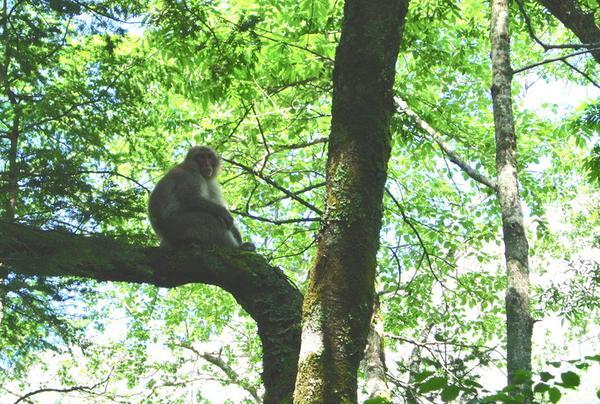 野生の猿!