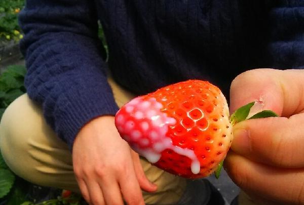 ひろびろ苺ファームの写真・動画_image_179948