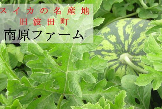 波田スイカ